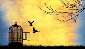 Generative Change Life Changing Coaching Online two birds flying free of their cage at sunset