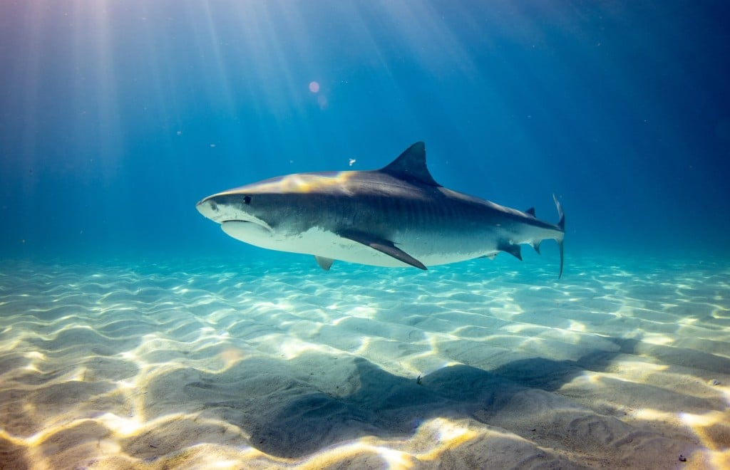 shark in the water Relationships Matter Generative Change Life Changing Coaching Online and by Phone