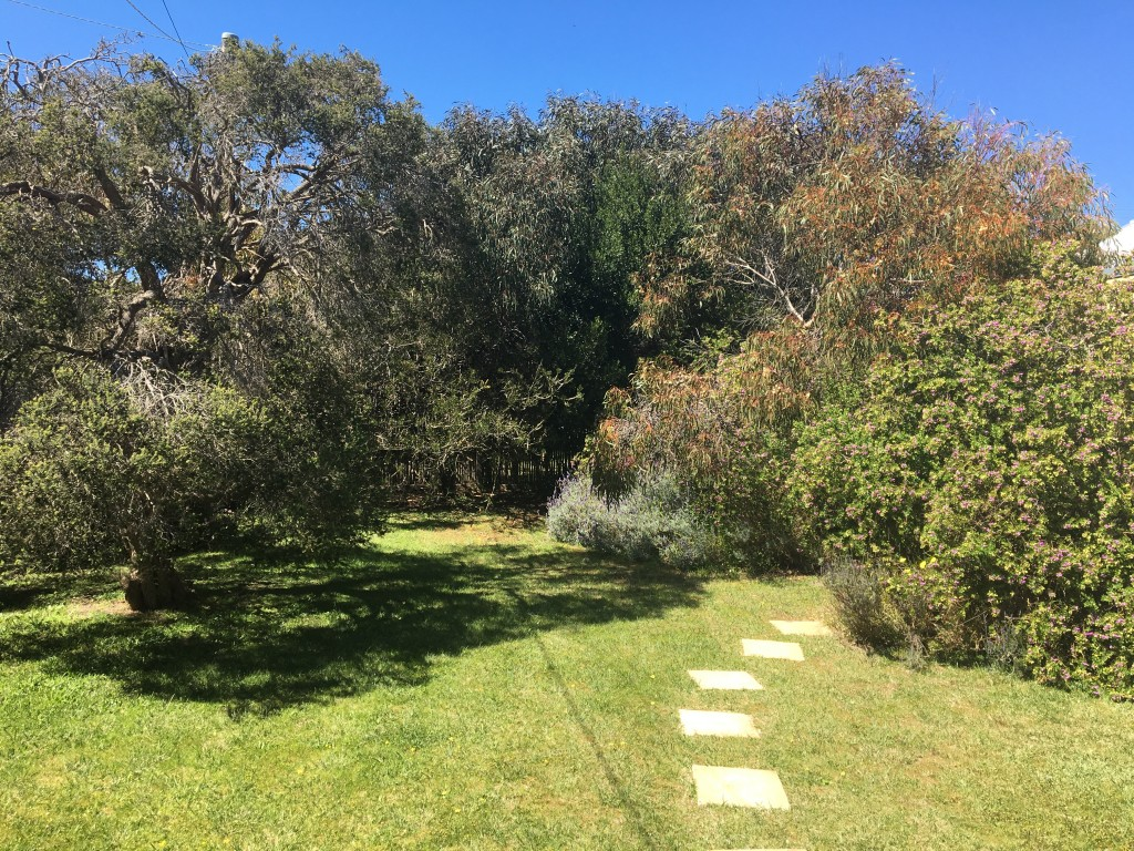 Stepping stones in a yard of grass with trees Generative Change Life Changing Coaching Online and by Phone The power of clear visioning