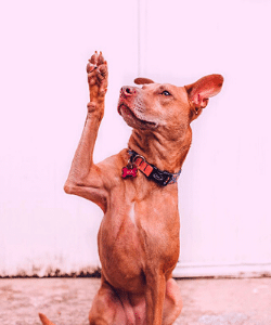 brown dog with paw up Where have all the questions gone? Generative Change Life Changing coaching