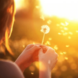 Woman blowing dandelion flower seeds in golden sunlight