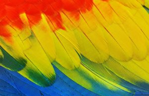 Bright feathers, red, yellow, blue, green Generative Change Life Changing Coaching Online and By Phone